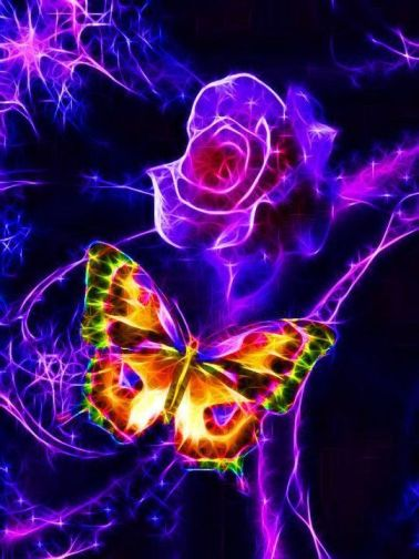 butterfly rose